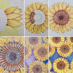Sunflower-Colouring-Pencil-Step-By-Step-Image